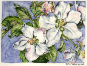 cathy weber - art - painting - woman -flower - watercolor - montana - painting - parchment - skin - botanical - study - flower - apple blossom