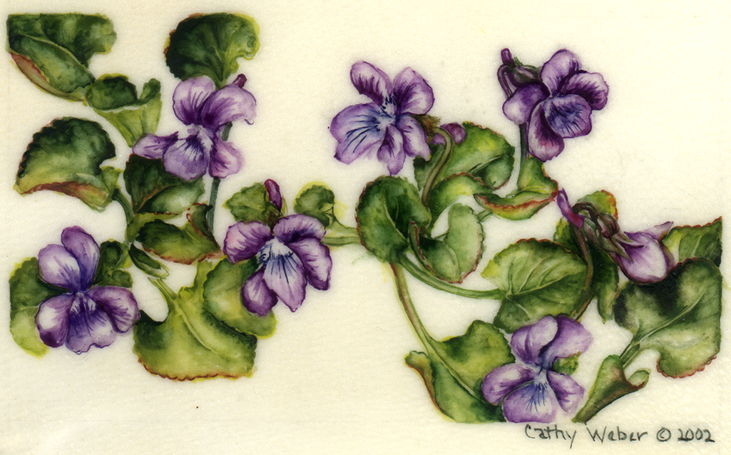 cathy weber - art - painting - woman -flower - watercolor - montana - painting - parchment - skin - botanical - study - flower - wild - violet
