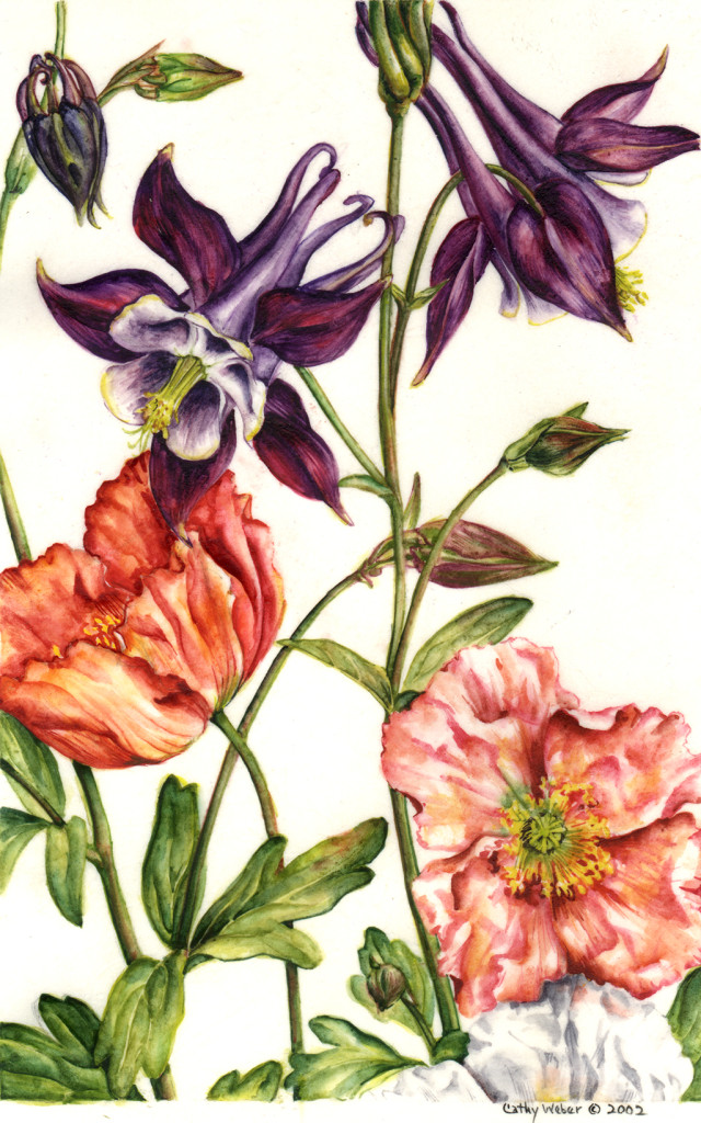 cathy weber - art - painting - woman -flower - watercolor - montana - painting - parchment - skin - botanical - study - flower -poppy - columbine