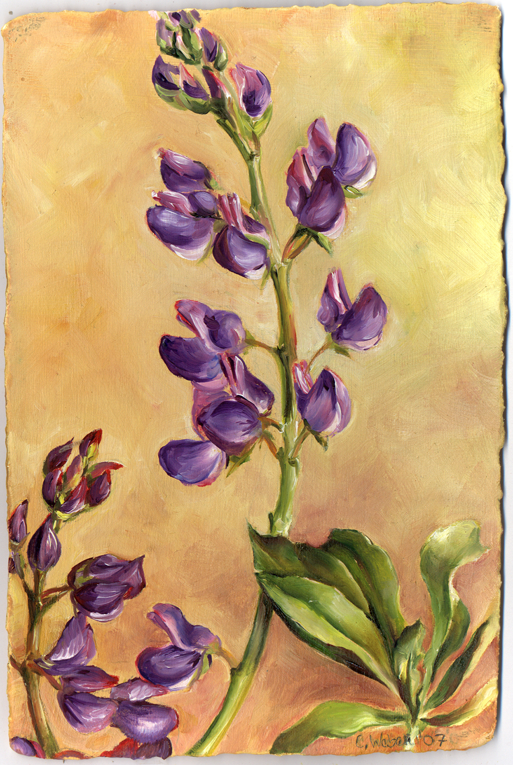 cathy weber - art - painting - woman -flower - watercolor- montana - painting - parchment - skin - botanical - study - wildflower - oil painting