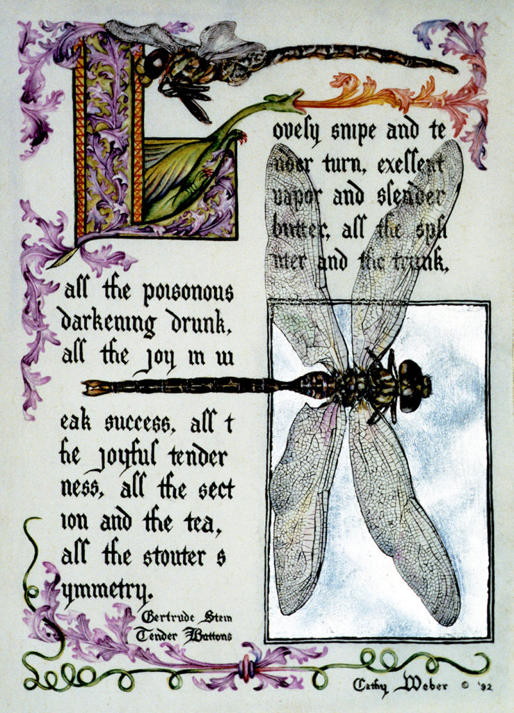 cathy weber - art - illumination - calligraphy - manuscript - watercolor - woman - rose - montana - gertrude stein - tender buttons - dragonfly