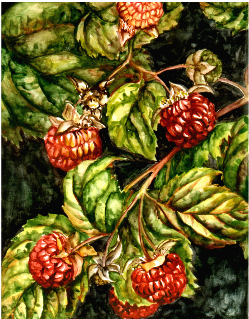 cathy - weber - artmaker - art - woman - oil - montana - painting - oil -poem - object - card - notecard - raspberry