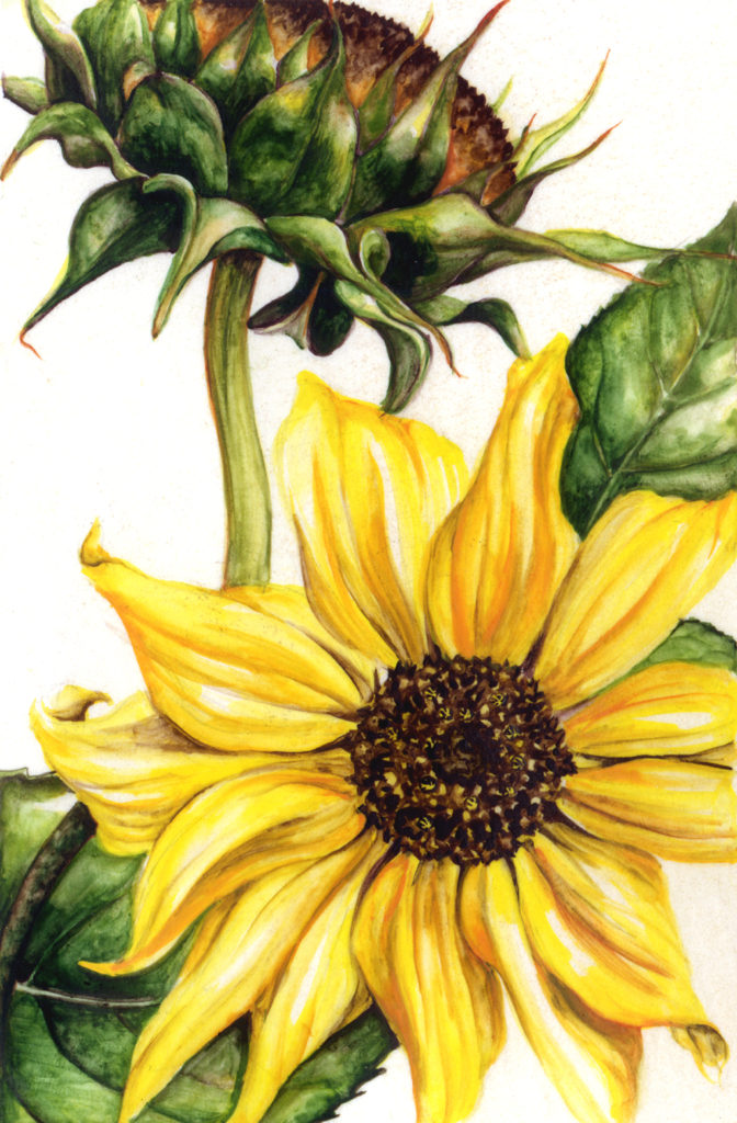cathy - weber - artmaker - art - woman - oil - montana - painting - oil -poem - object - card - notecard - sunflower