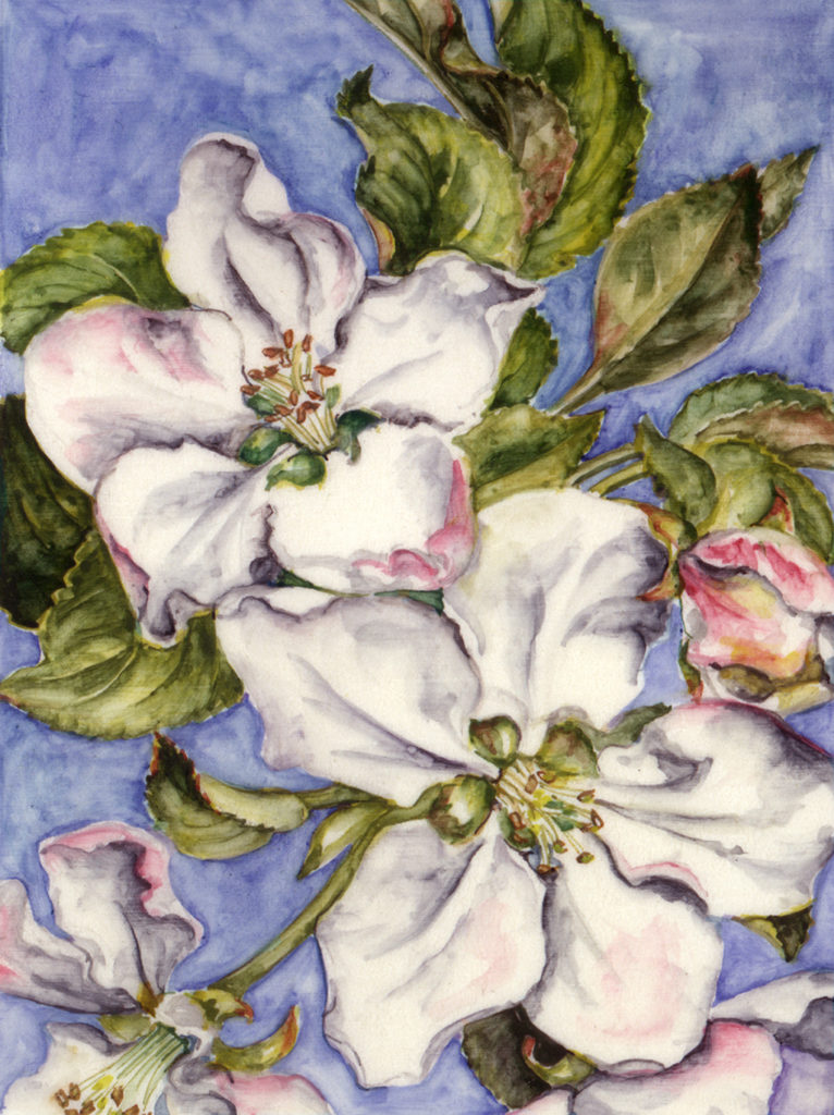 cathy weber - art - artoist - montana - cards - note cards - notecards - flowers - woman - women