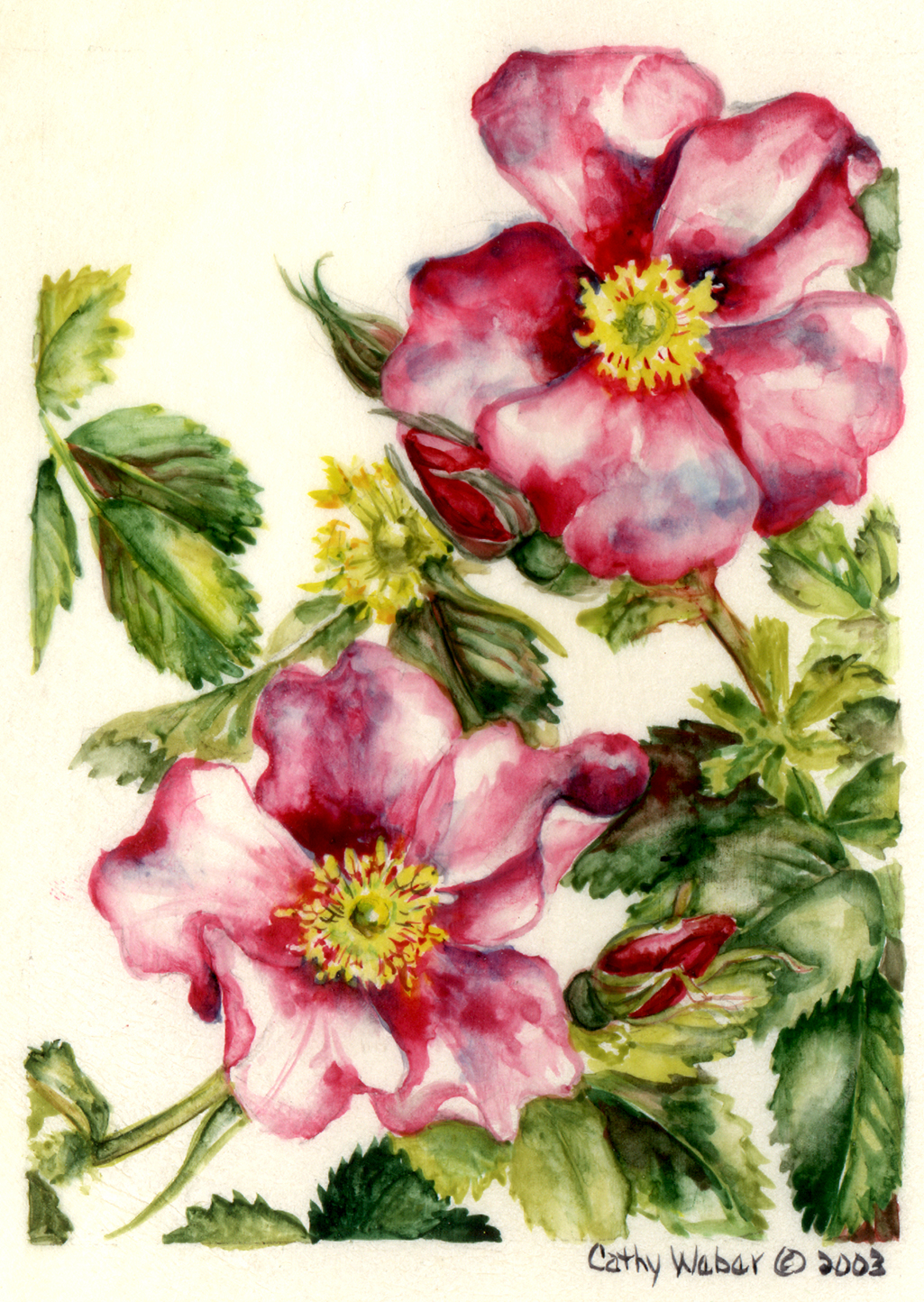 cathy weber - art - painting - woman -flowers - watercolor - moon phase- montana - painting - parchment - skin - botanical - study - wildflower - rosa woodsii