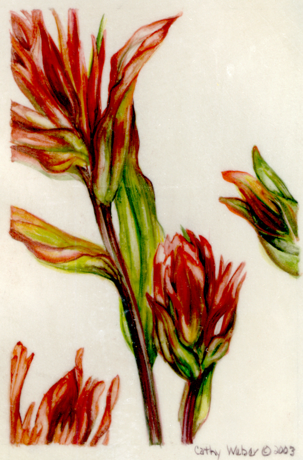 cathy weber - art - painting - woman -flowers - watercolor - moon phase- montana - painting - parchment - skin - botanical - study - wildflower - indian paintbrush