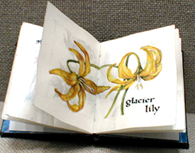 cathy weber - artmaker - montana - watercolor - woman - glacier lily - art - wildflower - artist - book