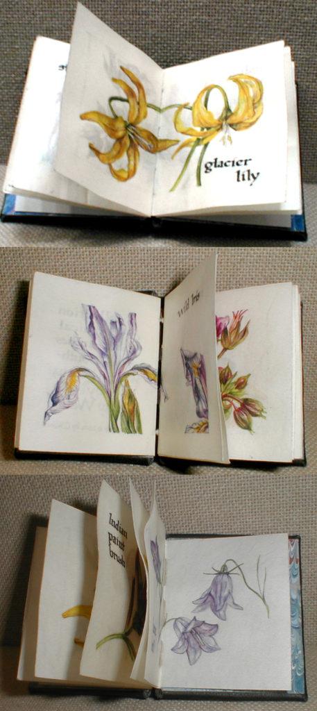 cathy weber - artmaker - montana - watercolor - woman - glacier lily - art - wildflower - artist - book